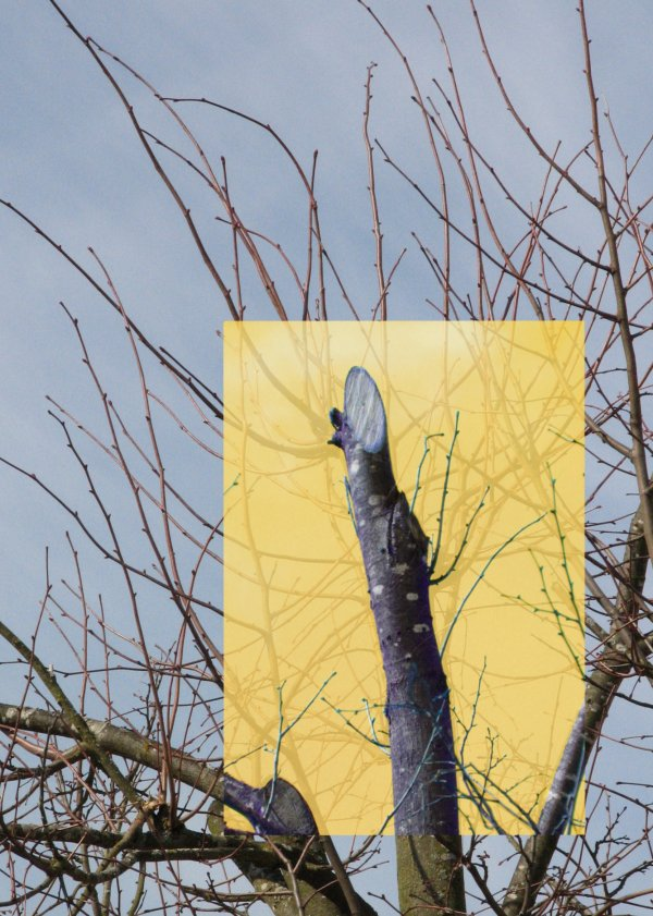 B ume schneiden bund naturschutz in bayern e v - Schnitt eines fenstereinbau nach ral montage ...